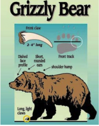 Grizzly.png